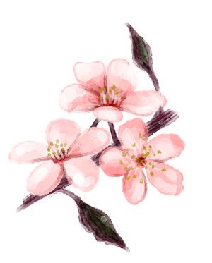 cherry_blossom_3